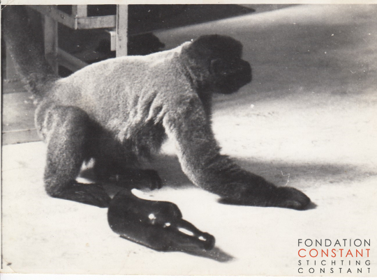 Constant and his pet monkey Boumibol (Boumi) at home, ca 1964.